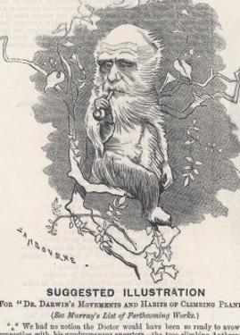 Charles Darwin, Depicted as a Tree-Climbing Anthropoid