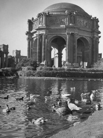 Palace of Fine Arts by Charles E. Steinheimer
