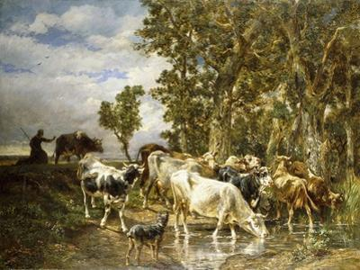 Herd of Cows at a Drinking Pool