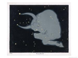 The Constellation of Taurus the Head Neck Shoulders and Forelegs of a Horned Bull by Charles F. Bunt