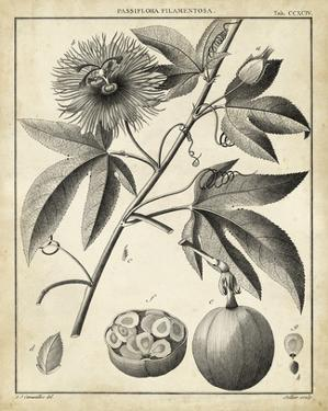 Passiflora I by Charles Francois Sellier
