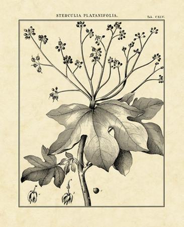 Vintage Botanical Study I by Charles Francois Sellier