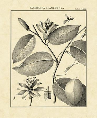 Vintage Botanical Study III by Charles Francois Sellier