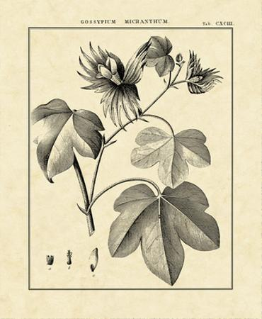 Vintage Botanical Study IV by Charles Francois Sellier