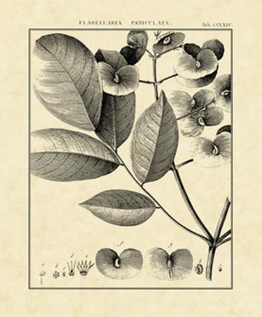 Vintage Botanical Study V by Charles Francois Sellier