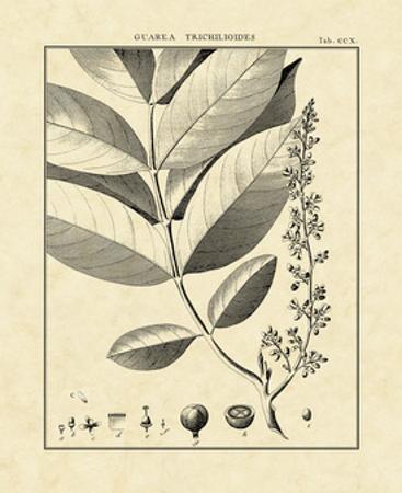 Vintage Botanical Study VI by Charles Francois Sellier