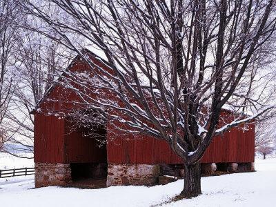 Barn and Maple after winter storm, Fairfax County, Virginia, USA