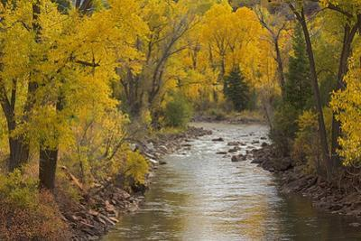 Crystal River, White River National Forest Colorado, USA by Charles Gurche