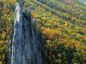 Fall Colors, Monongahela National Forest West Virginia, USA by Charles Gurche