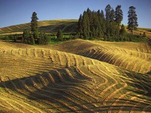 Fields, Palouse, Whitman County, Washington, USA by Charles Gurche