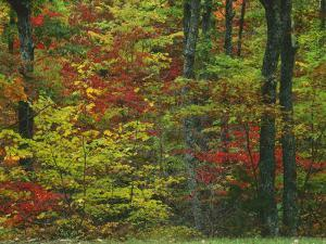 Forest, Blue Ridge Parkway, Virginia, USA by Charles Gurche