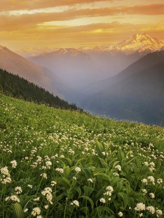 Hellebore and Sitka Valerian, Glacier Peak Wilderness, Washington, USA by Charles Gurche