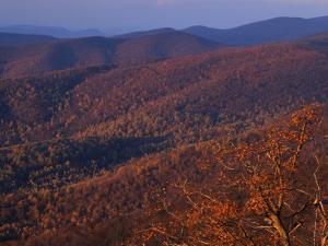 Jewell Hollow, Shenandoah National Park, Virginia, USA by Charles Gurche