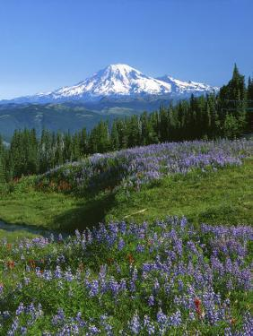 Mt. Rainer in distance, Meadows, Adams Wilderness, Mt, Washington, USA by Charles Gurche