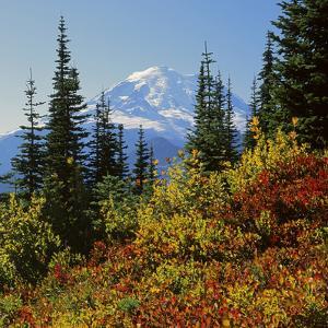 Mt Rainier Above Autumn Huckleberry, Chinook Pass, Washington, USA by Charles Gurche