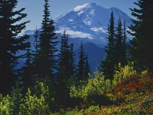 Mt. Rainier above autumn Huckleberry, Mt. Rainier National Park, Washington, USA by Charles Gurche