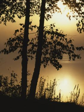Paper Birch along Square Pond at sunrise, Adirondack Park and Preserve, New York, USA by Charles Gurche