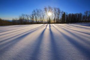Snow Field, Boulder Mountain, Dixie National Forest, Utah, USA by Charles Gurche