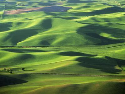 Wheat Fields, Palouse, Steptoe Butte State Park, Whitman County, Washington, USA by Charles Gurche