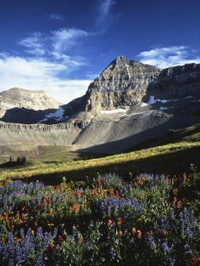 Wildflower meadows below Mt. Timpanogos, Uinta-Wasatch-Cache National Forest, Utah, USA by Charles Gurche
