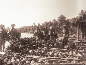 Copra (Coconut) and Fei(Banana) Harvesting. Tahiti, Late 1800S by Charles Gustave Spitz