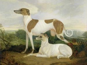 Two Greyhounds in a Landscape by Charles Hancock