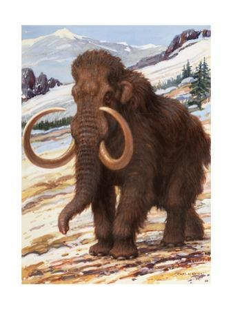 Woolly Mammoth Is a Close Relative to the Modern Elephant by Charles Knight