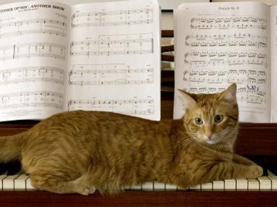 Family Cat Rests on a Piano Keyboard Beneath Sheet Music