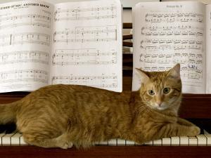 Family Cat Rests on a Piano Keyboard Beneath Sheet Music by Charles Kogod