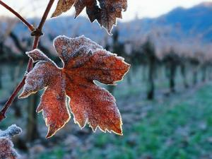 Leaf Covered in Frost by Charles O'Rear