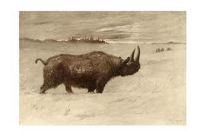A Painting of a Woolly Rhinoceros Tichorhinus of the Pleistocene Age by Charles R. Knight