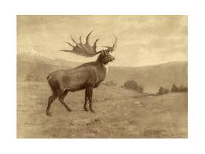 A Painting of an Irish Elk of the Pleistocene Era by Charles R. Knight