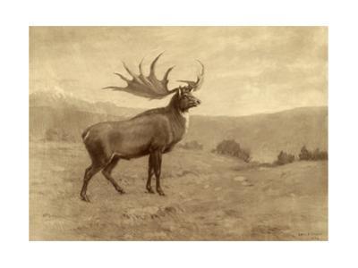 A Painting of an Irish Elk of the Pleistocene Era by Charles R. Knight