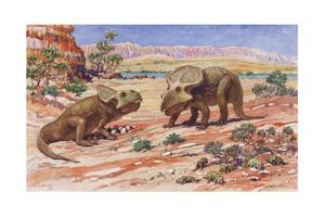 Ancient Protoceratops Were Egg-Laying Dinosaurs by Charles R. Knight