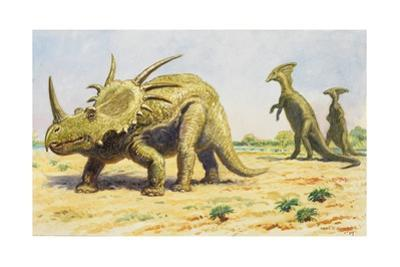 Both the Styracosaurus (Right) and the Parasaurolohus Were Herbivores by Charles R. Knight