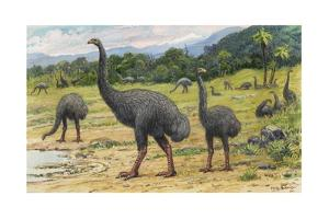 Man's Arrival on New Zealand May Have Caused the Extinction of Moas by Charles R. Knight
