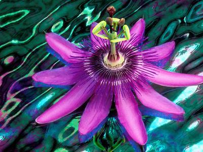 Detail of Passion Flower on Stained Glass, Alpharetta, Georgia, USA