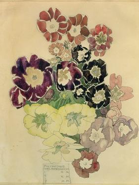 Polyanthus, Walberswick, 1915 by Charles Rennie Mackintosh