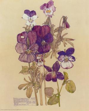 Wild Pansy by Charles Rennie Mackintosh