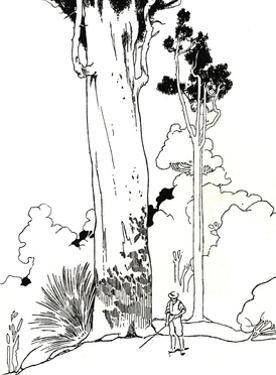 'A Kauri Tree', 1912 by Charles Robinson