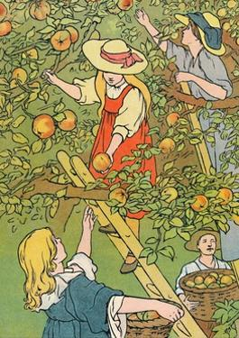 'Picking the Fruit', 1912 by Charles Robinson