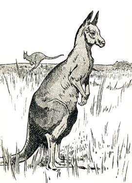 'The Kangaroo', 1912 by Charles Robinson