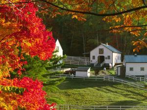 Morning Chores at the Imagination Morgan Horse Farm, Vermont, USA by Charles Sleicher