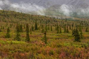 Autumn Colors in Denali National Park, Alaska by Charles Smith
