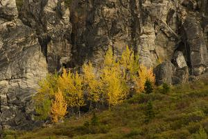 Fall Foliage in Denali National Park, Alaska by Charles Smith