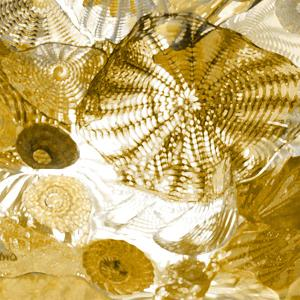 Underwater Perspective in Gold by Charlie Carter