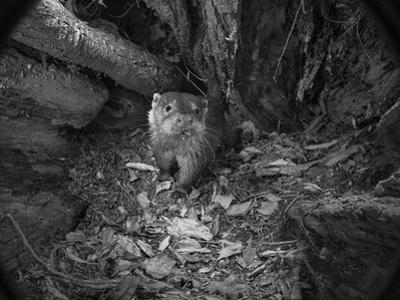 A Remote Camera Captures a River Otter by Charlie Hamilton James