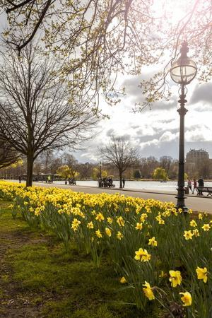 Visitors Walking Along the Serpentine with Daffodils in the Foreground, Hyde Park, London