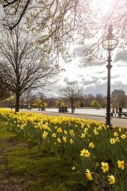 Visitors Walking Along the Serpentine with Daffodils in the Foreground, Hyde Park, London by Charlie Harding