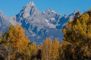 Autumn Foliage in Grand Teton National Park by Charlie James